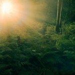 Лес Брокилон