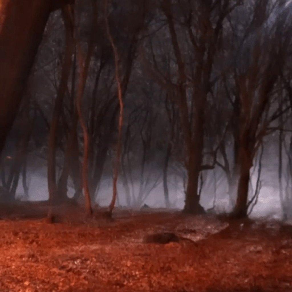 Искусственный дым в ночном лесу